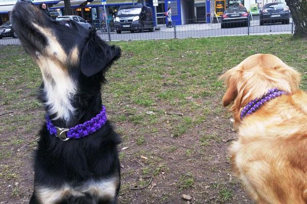 Jape & Peanut mit ihren neuen Halsbändern