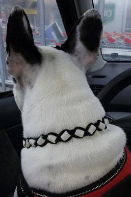 Iris mit ihrem neuen EMK Halsband