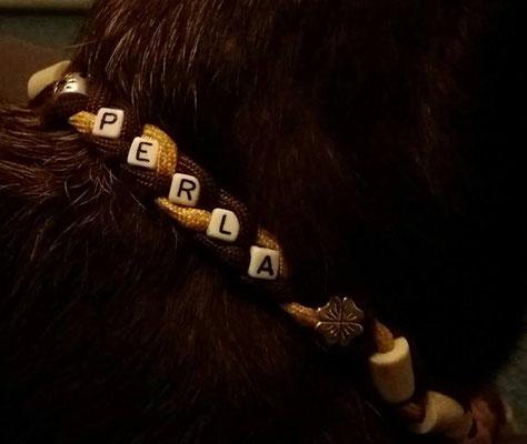 Perla mit ihrem EMK-Halsband