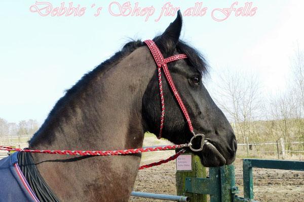 Reittense Gitano am Pferd