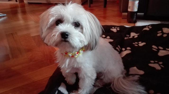 Lotte stolz mit ihrem EMK Halsband
