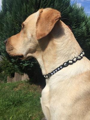 und auch Tzack präsentiert sein neues EMK-Halsband