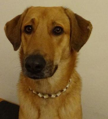 das Wiener Hundemädel Sina und ihr EM-Keramik Halsband