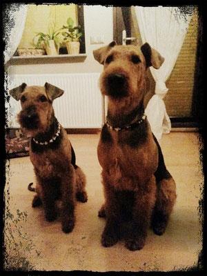 Exe & Stina mit ihren EMK Halsbändern