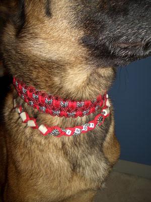 Indy mit ihren Halsbändern ganz in rot gehalten