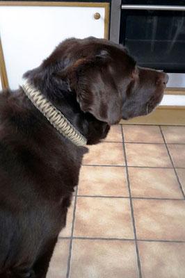 Balu mit seinem neuen Halsband Typ King Kobra