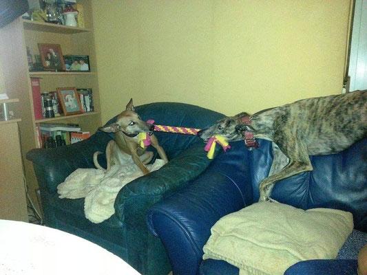 Lele & Bella beim Zergeltest