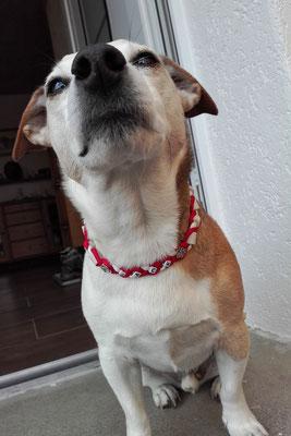 und auch Jack zeigt stolz sein EMK-Halsband