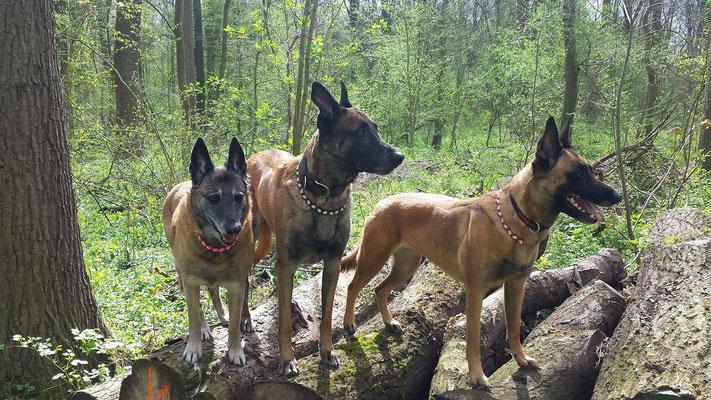 Nicky, Finn & Raven sind bestens gegen die Zeckenplage gerüstet