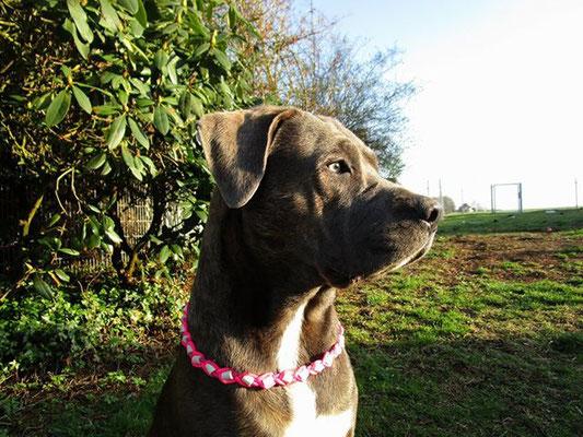 Aska mit ihrem neuen EMK  Halsband
