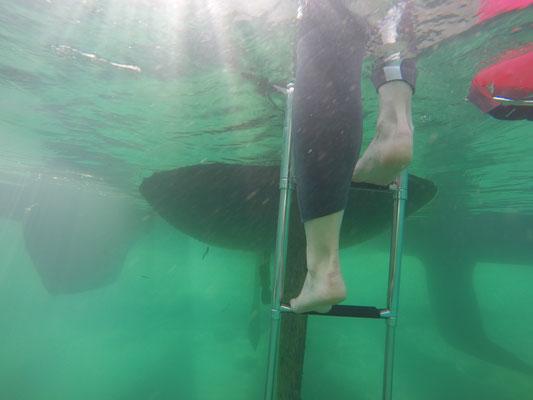 Open Water Training im Genfersee