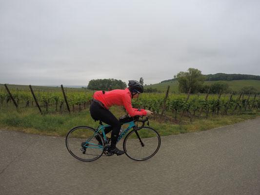 Radtour nach Riquewihr vorbei an den Rebbergen