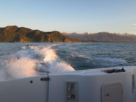Kaikoura - Dusky Delphin Tour um 5:30 Uhr