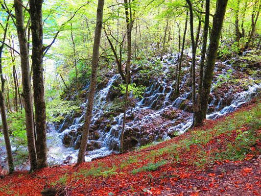 National Park Plitvicer Seen: Mitten im Wald wieder ein Wasserfall