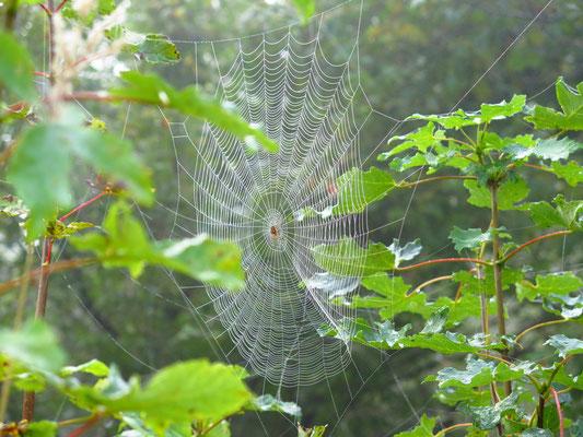 ....wahre Kunstwerke (so lange die Spinnen nicht drin sind)