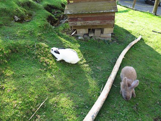 Kaninchen...