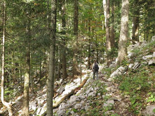 Start der Wanderung zum Gipfel Risnjak. Werden wir einen Bären, Luchs oder Wolf sehen?