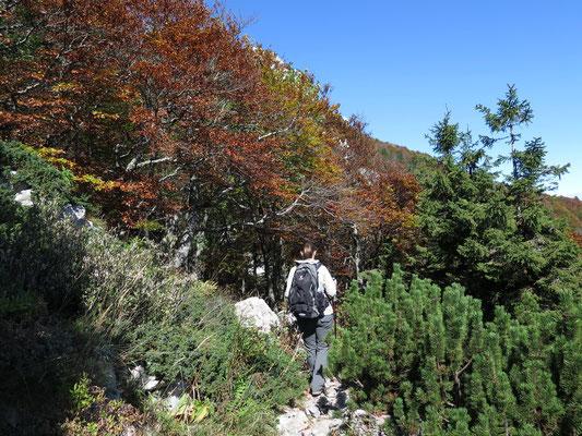 Wanderung geht langsam aus dem Wald heraus