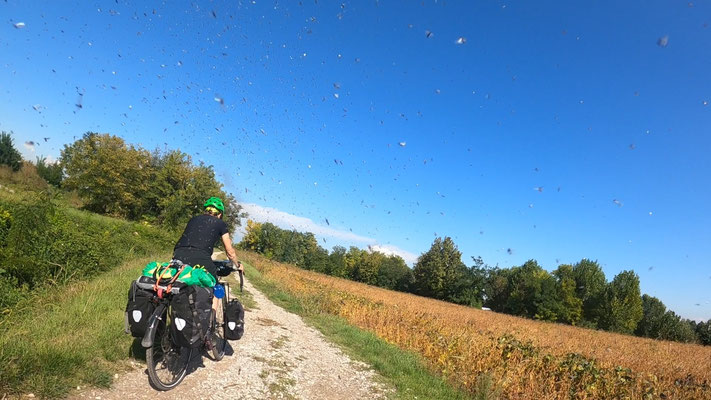 Wenn man durch eine Schar von fliegenden Ameisen fährt - ecklig!!