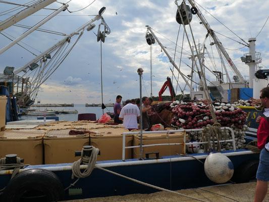 Hier konnten wir den lokalen Fischern bei der Ausbeute im Hafen zuschauen