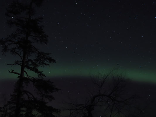 An unserem letzter Abend in Lappland hat sich das Nordlicht nochmals gezeigt