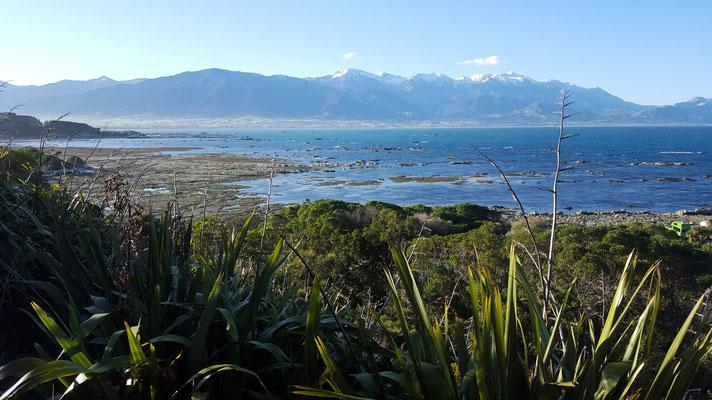 Kaikoura war eines unserer Highlights auf der Südinsel
