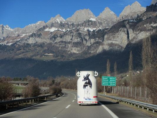 Milchtransport auf der Heimfahrt :)
