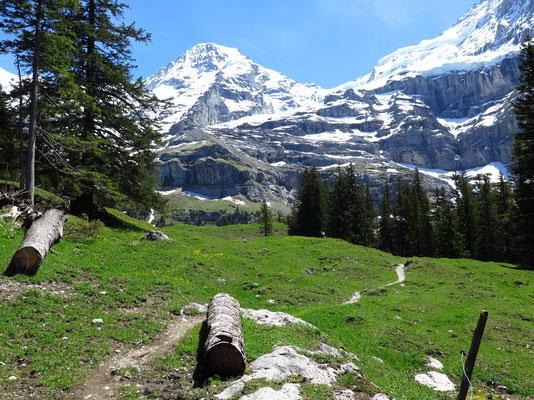 Schöner Bergwanderweg zur Biglenalp immer mit Sicht auf den Mönch