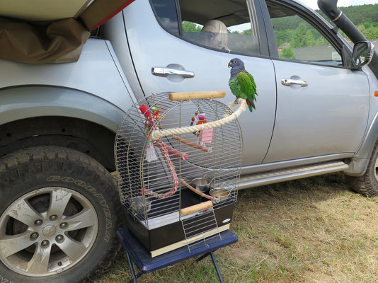Camping Area: reisefreudiger Papagei