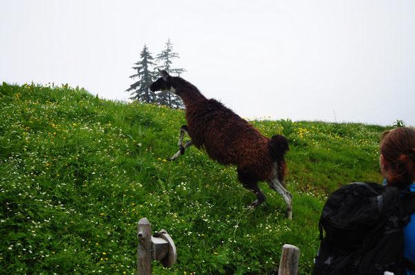 Abstieg vom Le Moléson