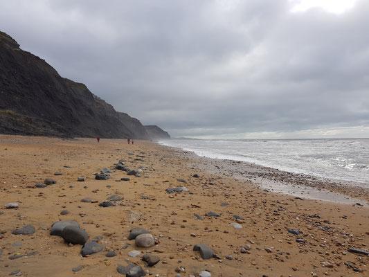 Charmouth Beach am Fossilien suchen