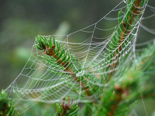 Vor allem am morgen sah man im National Park die unzähligen Spinnennetze..