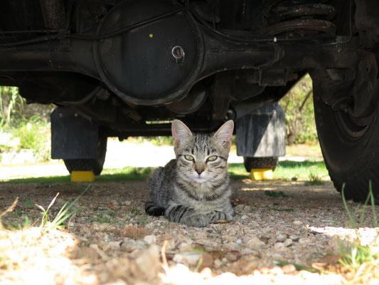 Bagheera zieht ja bekanntlich immer alle Katze an....diese hier hat es ihr am meisten angetan
