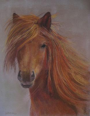 petit cheval - pastel - 40x30