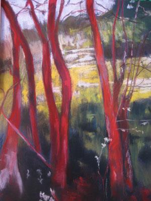 Troncs rouges - pastel - 40x30