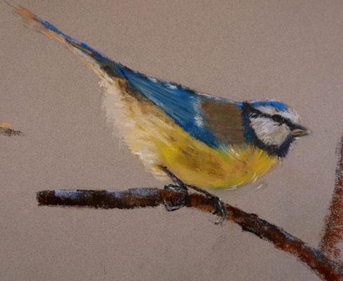 Oiseau 2 - pastel - 40x30