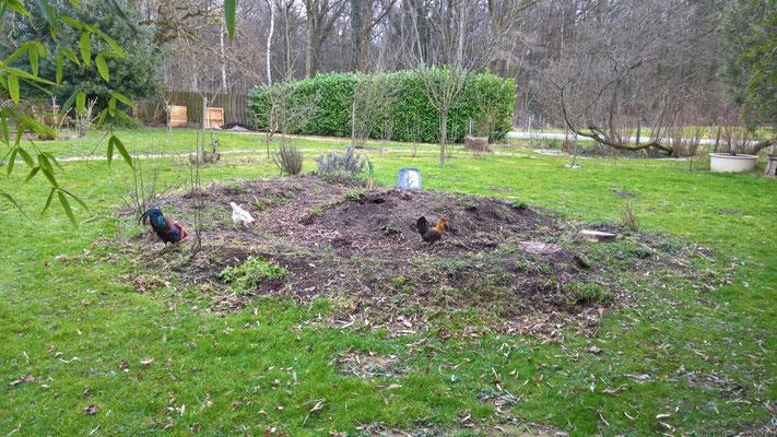 Derweil sich die Hühner auf dem ehemaligen Gemüsebeet tummeln