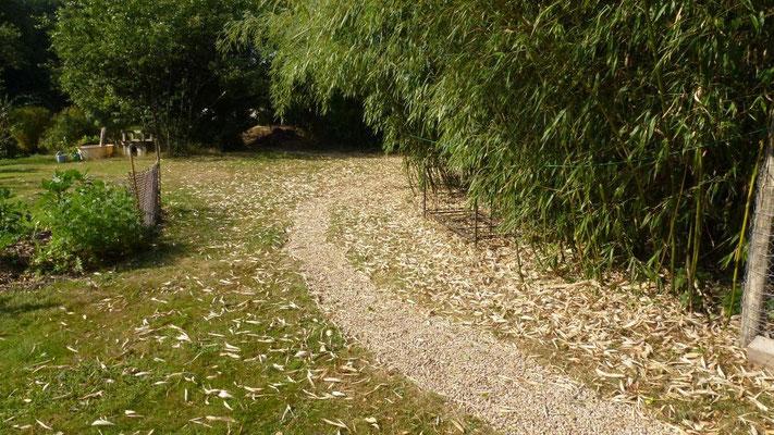 Der Bambus leidet