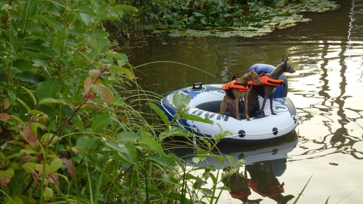 Gästehunde als Baywatchers mit Schwimmweste im Teich
