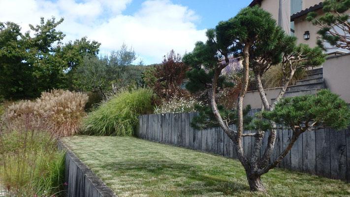 Pin en nuages sur jardin en terrasse