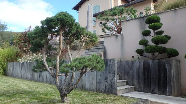 Pin et Juniperus en nuages