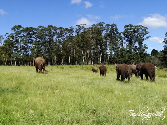 Elephant Park Knysna
