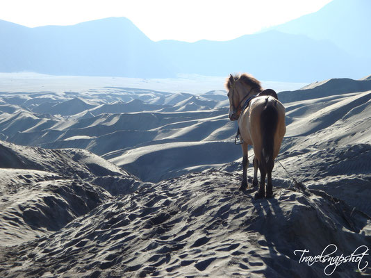Blick aufs Sandmeer