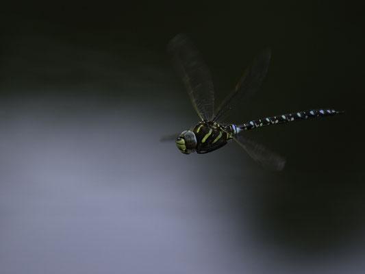 Drone bio - © Michel DAFOUR