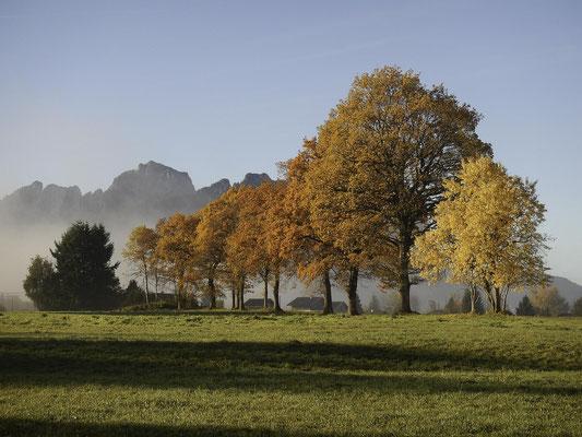 Douceur d'automne - © Fernand MORAND
