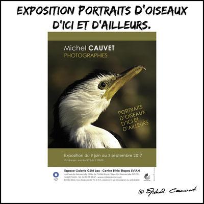 Exposition Portrait d'oiseaux