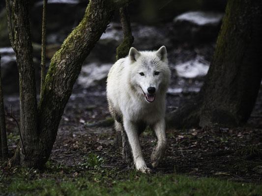 Promenons nous dans les bois - © Lydie BERTHET