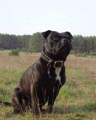 Verstellbares Hundehalsband