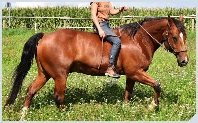 Pferdestrick Paracord