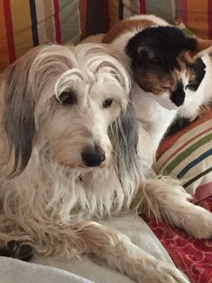 Wir adoptierten diese bezaubernde Hündin vor zwei Jahren aus dem Tierschutz bei Nienburg (Hannover). Lange wussten wir nicht, was sie ist. Sie ist sehr auf mich fokusiert, meidet Fremde völlig, ist der ideale Familienhund und ...
